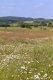 prairie maigre de fauche.jpg