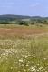 prairie maigre de fauche [copyright Wibail Lionel]