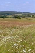E2.22 - Prairies de fauche de basse altitude peu à moyennement fertilisées