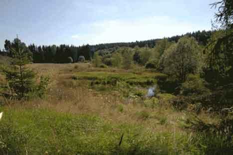 Prairie alluviale