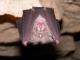 Rhinolophus_ferrumequinum_JLG_08.jpg