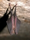 Rhinolophus_hipposideros_JLG_07.jpg