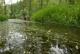 Rivière ardennaise à renoncules - Tawires.jpg