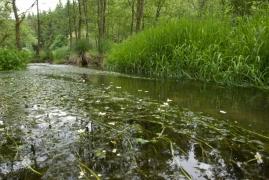 C2.fa - Ruisseaux ardennais à forte pente - oligotrophe