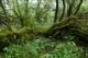 F3.1a - Saulaies non marécageuses à Salix aurita et Salix cinerea