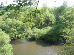 Saulaie riveraine.jpg
