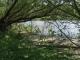 Saussaie riveraine [copyright]