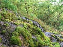 Source calcaire incrustante ou tuf dans la vallée de l'Hermeton