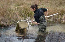 Suivi scientifique des amphibiens
