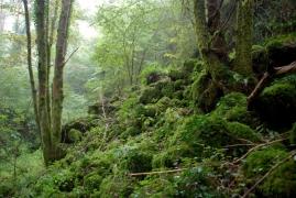G1.A41 - Forêts de ravins et de pente