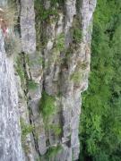 Végétation des rochers calcaires ensoleillés