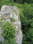 Végétation falaise calcaire ensoleillée
