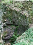 Végétation rocher calcaire ombragé