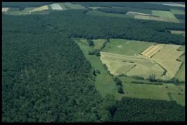 1140 - Vivi des Bois
